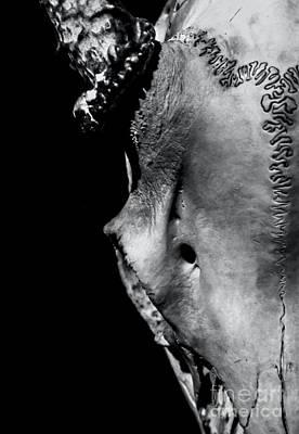 Photograph - Whitetail Deer Skull 1 - Right by James Aiken