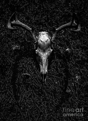 Photograph - Whitetail Deer Skull With Antlers by James Aiken