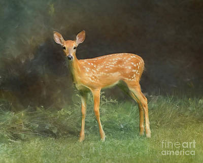 Photograph - Whitetail Deer Spotted Fawn by Clare VanderVeen