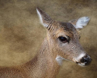 Whitetail Doe Portrait Art Print