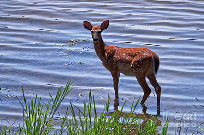 Photograph - Whitetail Fawn by Paul Mashburn