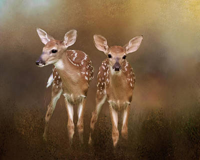 Photograph - Whitetail Fawn Twins by TnBackroadsPhotos
