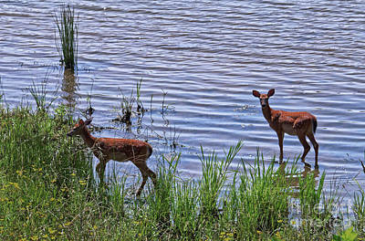 Photograph - Whitetail Fawns by Paul Mashburn