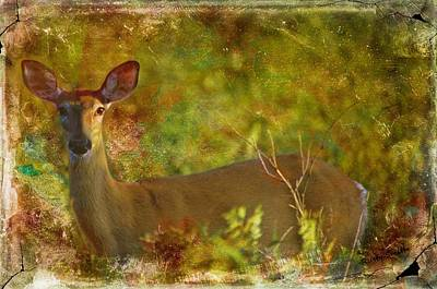 Digital Art - Whitetailed Doe by Rusty R Smith