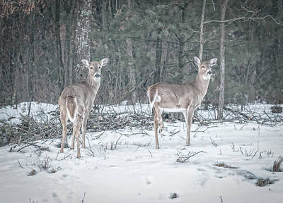 Photograph - Whitetails 2018-1 by Thomas Young