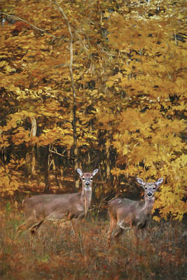 Photograph - Whitetails In Autumn by Jai Johnson