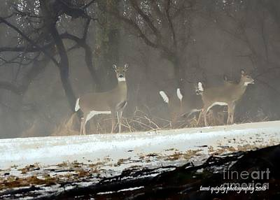 Photograph - Whitetails In The Winter Mist by Tami Quigley