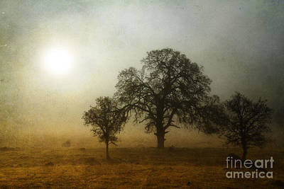 Photograph - Whitmore Fog by Randy Wood