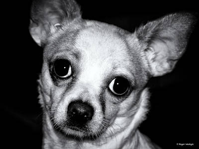 Dogs Photograph - Who Can Resist by Roger Wedegis