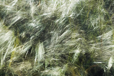 Photograph - Who Has Seen The Wind 2 by Linda McRae