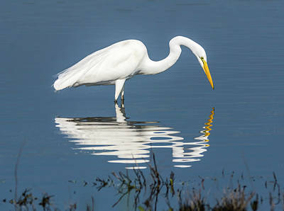 Great Egret Photograph - Who Is Fairest Of Them All... by Loree Johnson