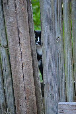 Photograph - Who Is There - Cat At The Gate by rd Erickson