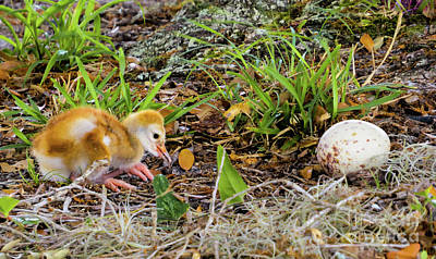 Cute Animals Photograph - Who Lost The Egg by Zina Stromberg