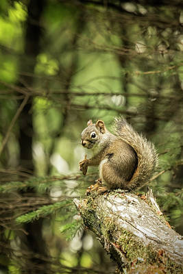 Photograph - Who You Calling Squirrelly? by Belinda Greb