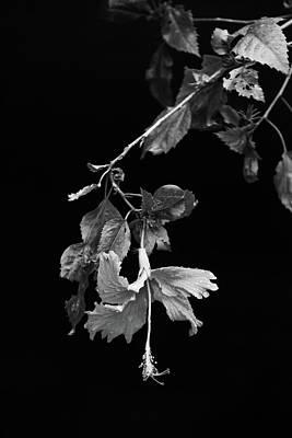 Photograph - Whodafort by Jez C Self
