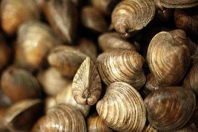Photograph - Whole Clams by Todd Klassy