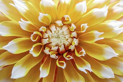 Mixed Media - Whole Lotta Yellow by Trish Tritz