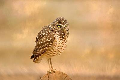 Photograph - Whoo Me by Lynn Hopwood