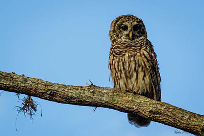 Photograph - Whooo by Robin Blaylock