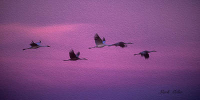 Photograph - Whooping Crances In Twilight by Mark Miller