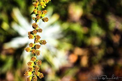 Photograph - Wop Bob A Lua Wop Bam Boom by Denise Barnhart