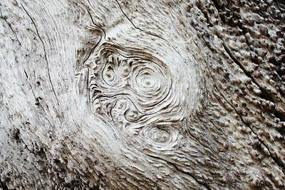 Photograph - Whorly Wood by Lynda Dawson-Youngclaus