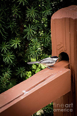 Photograph - Who's In There? by Deborah Klubertanz