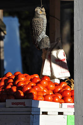 Who's Tomatoes Art Print by Jan Amiss Photography