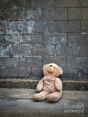 Photograph - Why Bear by Robin Zygelman