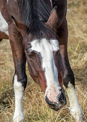 Photograph - Why The Long Face? by Randy Straka