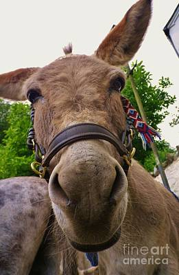 Photograph - Why The Long Face? by Richard Brookes