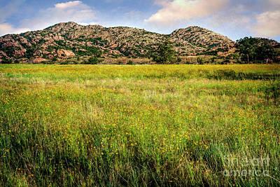Wichita Mountain Wildflowers Art Print by Tamyra Ayles