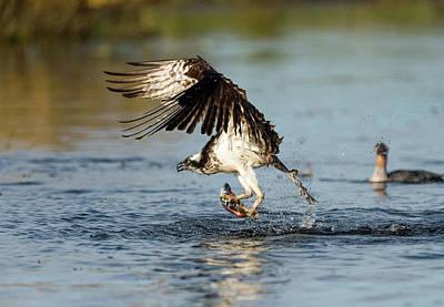 Photograph - Wicked Osprey by Scott Warner