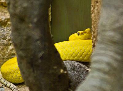 Photograph - Wicked Snake by Douglas Barnett