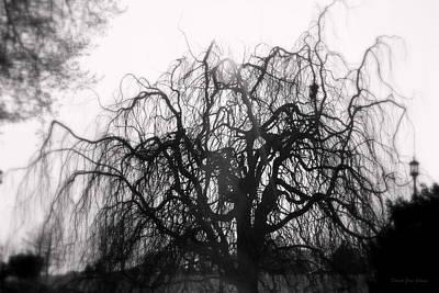 Photograph - Wickedly Beautiful by Deborah  Crew-Johnson