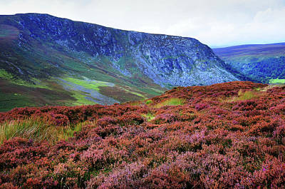 Photograph - Wicklow Heather Carpet by Jenny Rainbow