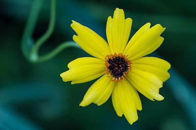Color Photograph - Wide Awake by Jennifer Luzio