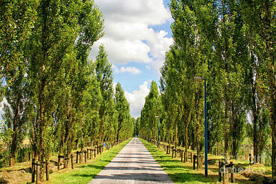 Photograph - Wide Road With Trees by Patricia Hofmeester