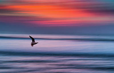 Flying Seagull Photograph - Widemouth Impressionist 3, Bude, Cornwall. Uk by Maggie McCall