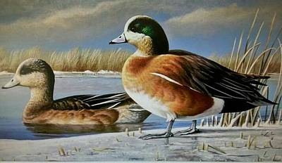 Wall Art - Painting - Wigeon Pair by Paul Makuchal