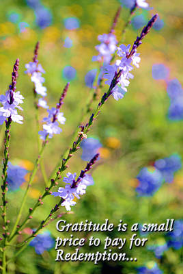 Photograph - Wild About Gratitude 1 by Kate Word