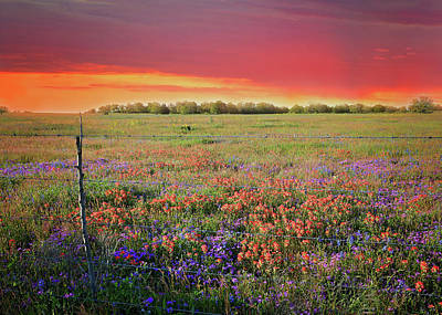 Photograph - Wild About Texas Sunsets by Lynn Bauer