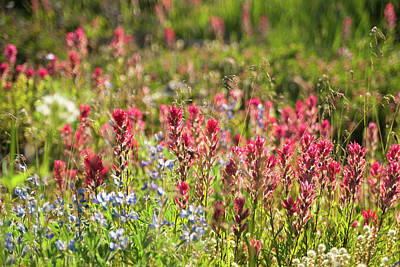 Photograph - Wild About Wildflowers by Crystal Hoeveler