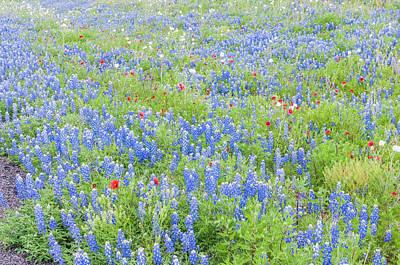 Photograph - Wild About Wildflowers Of Texas. by Usha Peddamatham