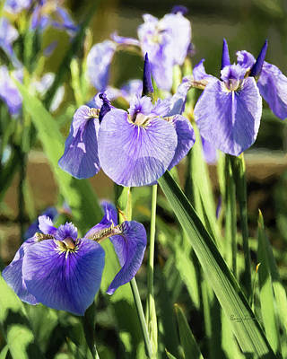 Wilderness Camping - Wild Alaskan Irises III by Penny Lisowski