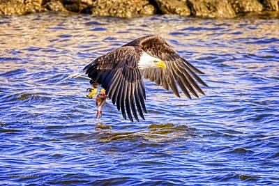 Photograph - Wild American Bald Eagle by LeeAnn McLaneGoetz McLaneGoetzStudioLLCcom