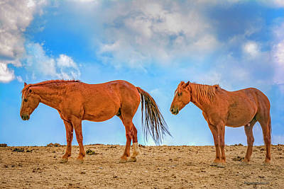 Freedom Photograph - Wild American Horses by LeeAnn McLaneGoetz McLaneGoetzStudioLLCcom