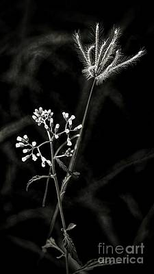 Digital Art - Wild And Beautiful B/w by Ian Gledhill
