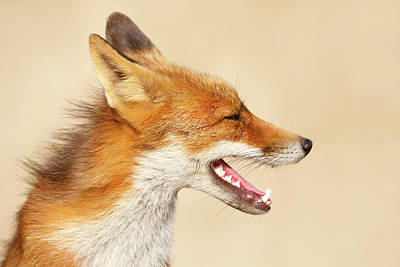 Contact Photograph - Wild And Free - Fox Portrait by Roeselien Raimond