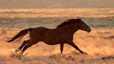 Photograph - Wild And Free by Jack Bell